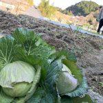 山添村で収穫してきました\( 'ω')/