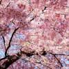 春になれば❗行楽シーズン❗
